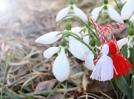 Snowdrop flowers with martenitsa or martisor.