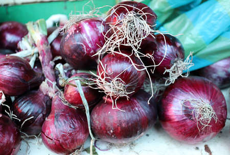 Close up of fresh red onion bulbs background texture. Allium cepa. Standard-Bild