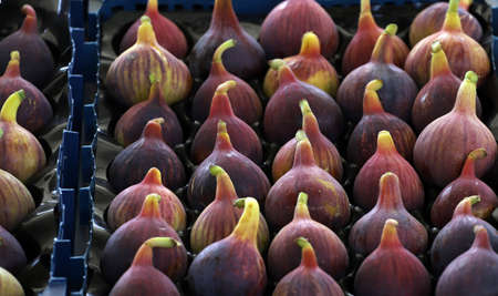 Colorful figs in line or pattern, on daylight. Archivio Fotografico