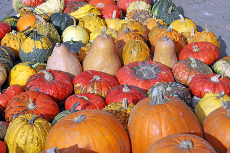 Colorful ornamental pumpkins, gourds and squashes in the street for Halloween holiday background Archivio Fotografico