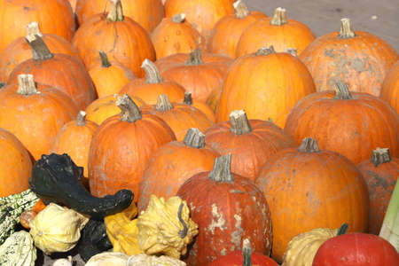 Colorful ornamental pumpkins, gourds and squashes in the street for Halloween holiday background Banco de Imagens