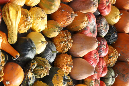 Colorful ornamental pumpkins, gourds and squashes in the street for Halloween holiday.