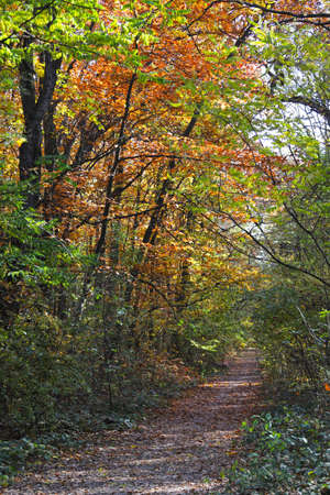Pathway in the forest with autumn leaves and colors. Autumn background.