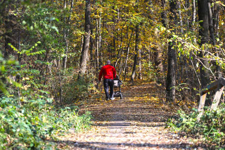 � man pushes a stroller on a pathway in the forest, under the autumn leaves.
