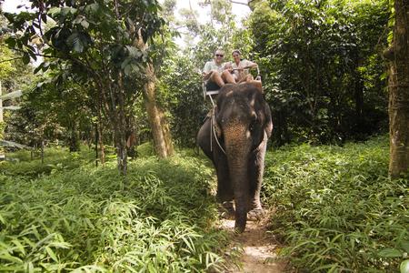 thai elephant: Family elephant riding