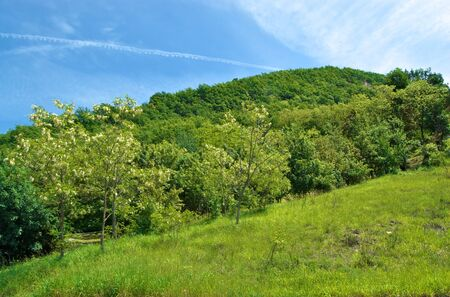 emilia romagna: Green hill and forest in Northern Italy