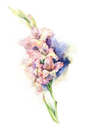 gladiolus: watercolor gladiolus