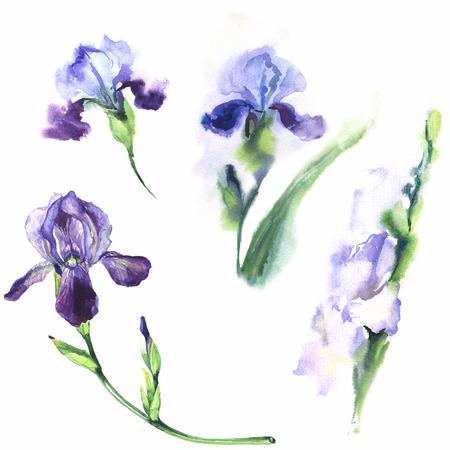 irises: Watercolor Irises Stock Photo