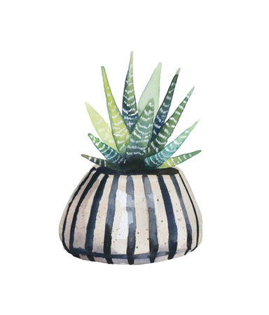 exotic plant: Watercolor succulent in a flowerpot. Isolated on a white background.