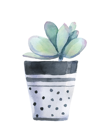 Watercolor succulent in a flowerpot. Isolated on a white background.