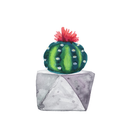 Watercolor succulent in a flowerpot. Isolated on a white background. Handdrawn green succulent in pot. Blossom watercolour cactus. Blooming cactus. Flower Illustration