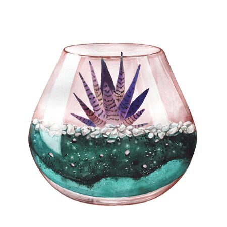 Watercolor illustration. Zebra cactus. Haworthia striped. Terrarium for succulents and cacti. Open glass sphere. Round transparent vase. Isolated on background. Home flower. Home Decor. Neon color.