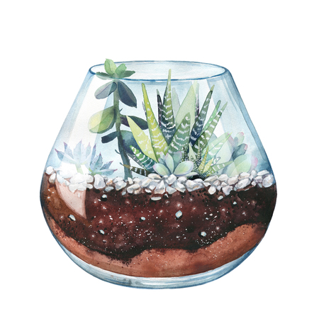 Watercolor illustration. Composition of succulents. Floral design. Terrarium for succulents and cacti. Open glass sphere. Round transparent vase. Isolated on white background. Home flower. Home Decor. Stock Photo