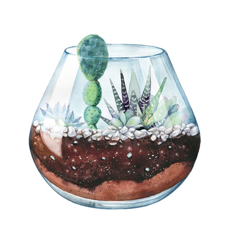 terrarium: Watercolor illustration. Composition of succulents. Floral design. Terrarium for succulents and cacti. Open glass sphere. Round transparent vase. Isolated on white background. Home flower. Home Decor. Stock Photo