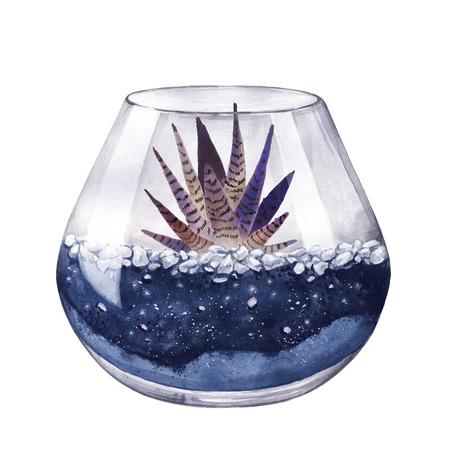 terrarium: Watercolor illustration. Zebra cactus. Haworthia striped. Terrarium for succulents and cacti. Open glass sphere. Round transparent vase. Isolated on background. Home flower. Home Decor. Neon color.