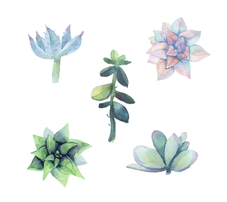 Set of watercolor succulent. Isolated on a white background. Hand drawn. Flower Illustration. Herbarium of succulent garden. Elements for design of invitations, print, posters, fabrics.