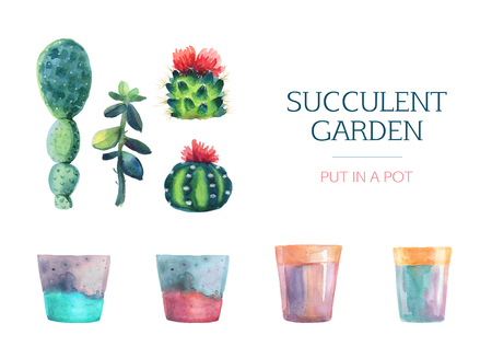 Set of watercolor succulent and a flower pot. Isolated on a white background. Hand drawn. Blooming cactus. Flower Illustration. Succulent garden. Plant a plant in a pot.