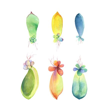 fondo para bebe: Set of watercolor succulent babies. Isolated on a white background. Hand drawn. Flower Illustration. Herbarium of succulent garden. Elements for design of invitations, print, posters, fabrics.