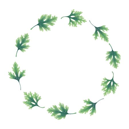 Illustration. Wreath of parsley leaves isolated on white background.