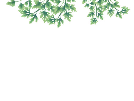 Green parsley leaves at the borders of the illustration on the top. Inside an empty white background. The vegetation grows on top. Hanging leaves and branches. Stock Photo