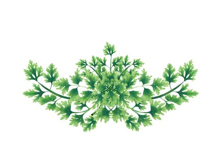 Decorative bouquet of parsley leaves. Decoration for menu, banner, logo or website. Floral decorative elements with parsley leaves.
