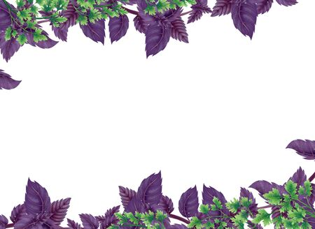 Illustration of Basil and parsley in rectangle. Decor of liane at the top and bottom, in the center of an empty background. Illustration of leaves and branches for decoration. Stock Photo