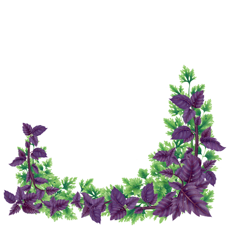 Illustration of Basil and parsley in square. Decor of liane on the below. Illustration of leaves and branches for decoration. Inside an empty white background.