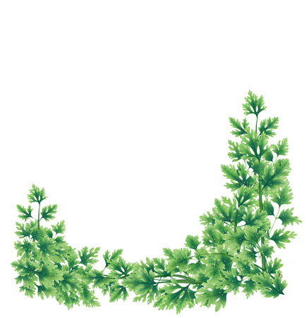 Wreath of parsley leaves at the lower border. Illustration for decoration. Inside an empty white background.