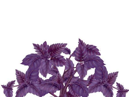 Couronne de feuilles de flou de feuilles de palmier et branches isolé sur fond blanc Banque d'images - 99206670