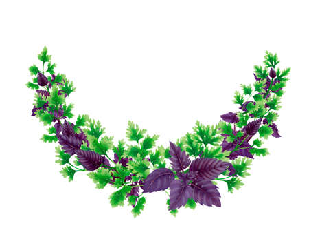 Semicircle wreath of parsley and basil leaves and branches isolated on white background.