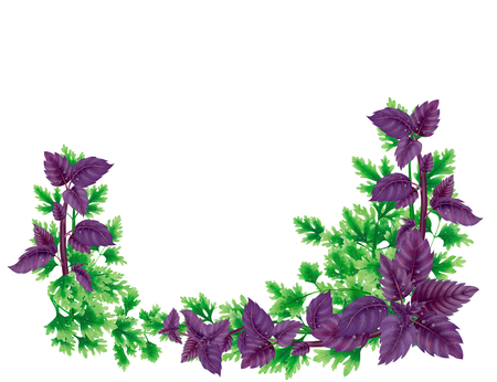 Illustration rectangular frame, a decoration of Basil and parsley leaves on bottom. Liana on the edges of the pictures. In the center of a blank white background.