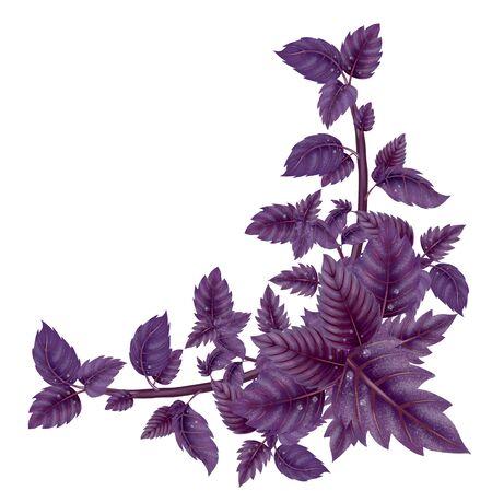 Décoration pour le placard . feuilles et branches de pot de pin. illustration de fleur isolé sur fond blanc. haute illustration Banque d'images - 99463352