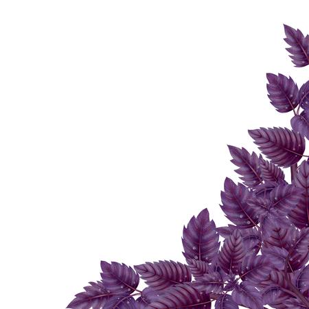 Décoration pour le placard . feuilles et branches de pot de pin. illustration de fleur isolé sur fond blanc. haute illustration Banque d'images - 99463354