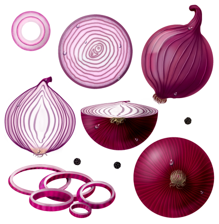 Large set. Illustration of a red onion. Whole vegetable, half, rear view, front view, slice, rings and Black pepper