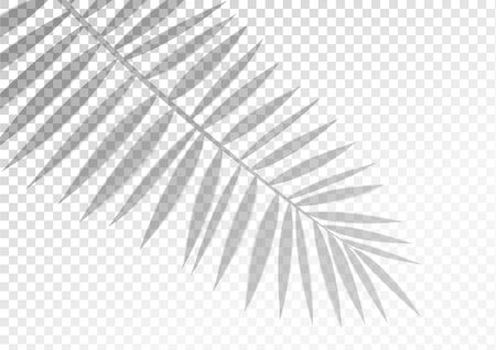 The transparent shadow overlay effect. Tropic leaf. Mockup with overlay a palm leaf shadow. Natural lighting overlays shadow on top. Scene of Tropical Leaf Shadow from the window. Realistic vector.