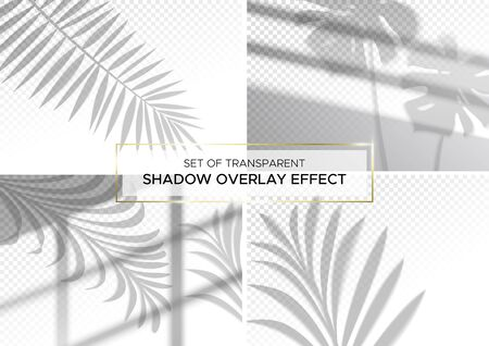 Set of transparent shadow effects for branding. A4 format Mockups. Scenes of natural lighting. Photo-realistic vector illustration. The monstera leaves, palm branches and window frames overlay shadows Ilustrace