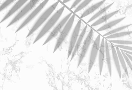 The transparent shadow overlay effect. Tropic leaf on the white marble background. Vector.
