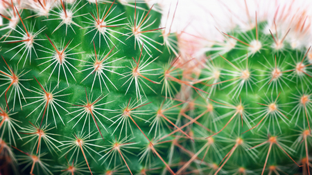 Cactus macro detail. Cacti closeup Minimal concept. Green neon Mood on white background. 스톡 콘텐츠