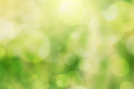 green bokeh and sunlight, Natural background Banco de Imagens