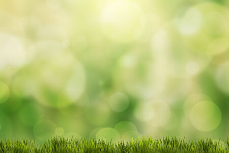 spring green grass with green bokeh and sunlight Banco de Imagens