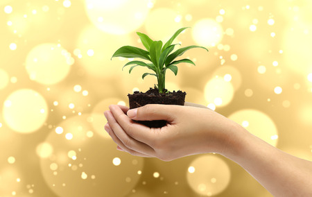 plant in the hand on gold bokeh and blur background Banco de Imagens