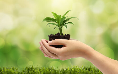 plant in the hand on natural background Banco de Imagens