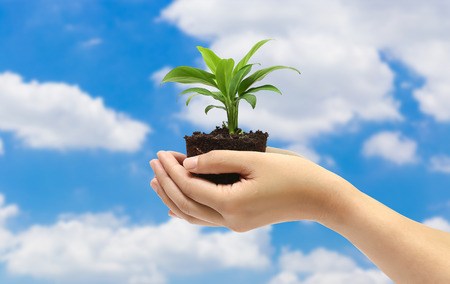 plant in the hand on blue sky background