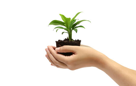 holding green plant in the hand on white background