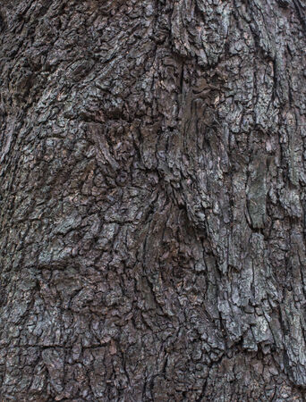 tree bark texture and background pattern