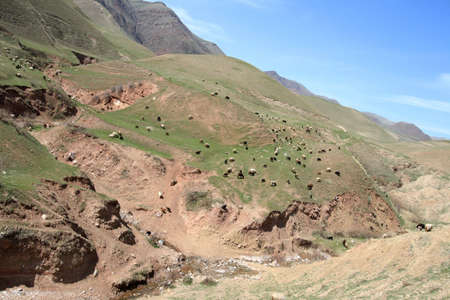 The landscape of Tajikistan with many sheep in spring Stock Photo - 2853894