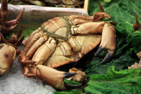 Crab on La Boqueria Market in Barcelona, Spain photo