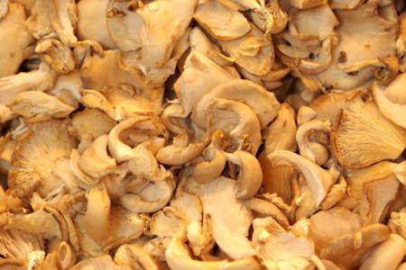 Mushroom for sale at La Boqueria market in Barcelona, Spain photo