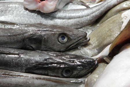 The fish at La Boqueria market in Barcelona, Spain photo