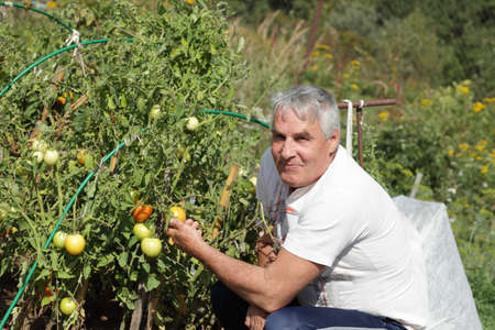 The happy man holds tomato in the garden photo